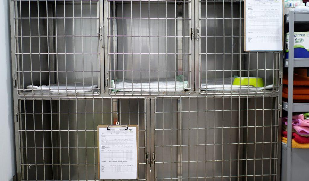 veterinario_wapiti_cangas_instalaciones_hospital_perros1